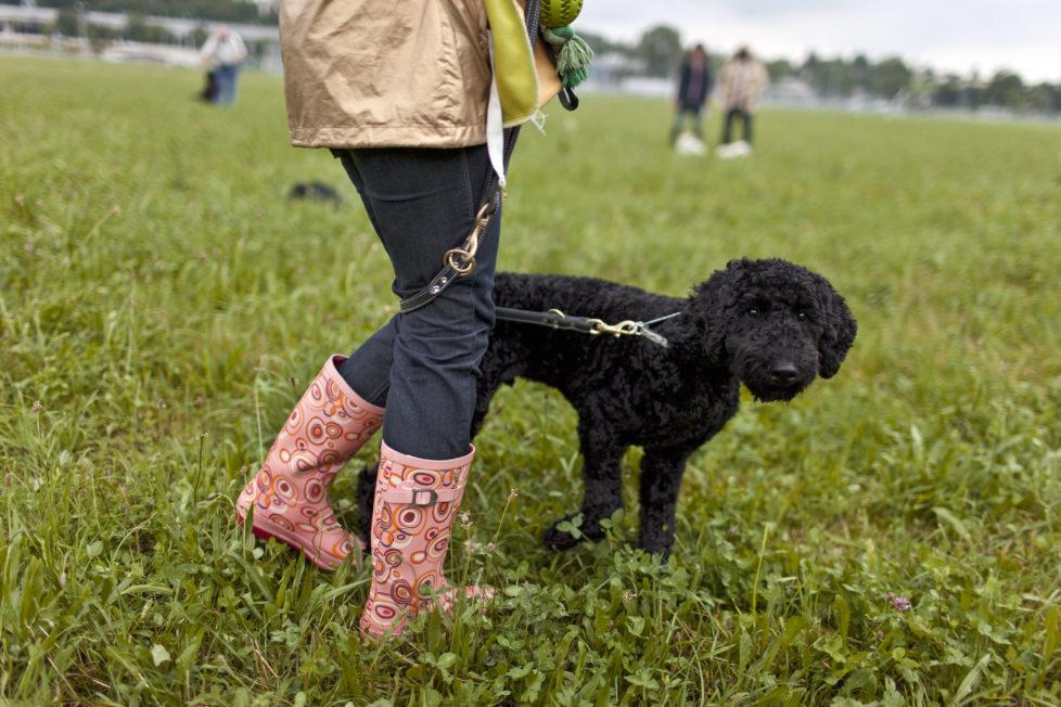 Er will nur spielen: Aber Hundebisse können schnell ins Geld gehen. Foto: Keystone