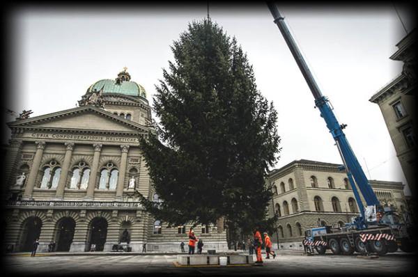 Die Weihnachtstanne wird auf dem Bundesplatz aufgestellt. © Adrian Moser