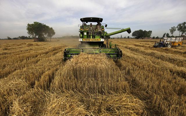 Getreideernte in Indien. (Keystone)