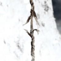 Hinterlistig oder lebensrettend durchgeschnitten: Das Seil, um das sich Legenden drehen. Screenshot: SRF