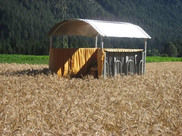 Ein Bett im Kornfeld im Albulatal GR (Foto: Wasserundbrot.ch)