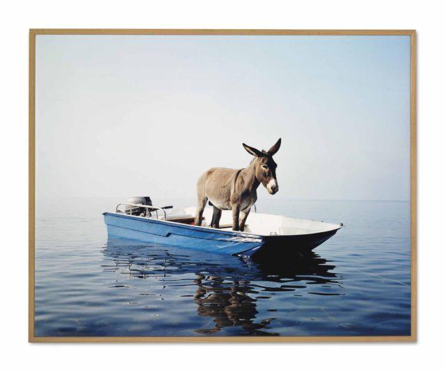 Paola Pivi, «Untitled (Donkey)», Fotoprint, 2003, verkauft für $227,000 . Mitten im blauen Ozean eine verlorene Kreatur. Wo gehört sie hin? Wird sie jemand retten? Eine simple Metapher, die viele unserer Ängste anspricht.