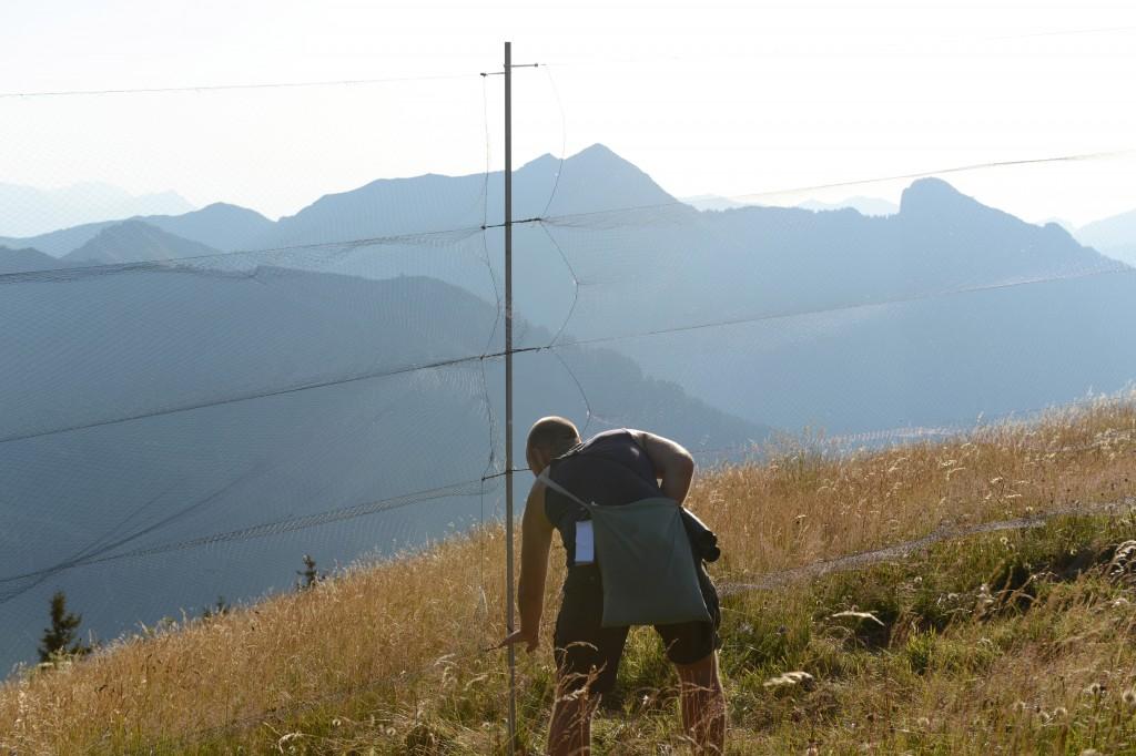 Col de Bretolet - Vogelberingungsstation der Vogelwarte Sempach - Helfer sucht nach Vögeln im Netz