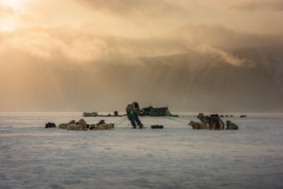 Niels Minunge bindet seine Hunde wieder zusammen, nachdem sie sich von den Seilen losgerissen haben und davongelaufen sind. Die grönländischen Huskys müssen ständig angeleint sein – sonst gehen die auf die Jagd trainierten Hunde aufeinander los