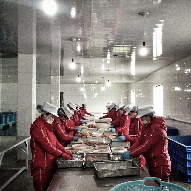 North Korean workers sort seafood at a factory in Rajin. (AP Photo/David Guttenfelder)