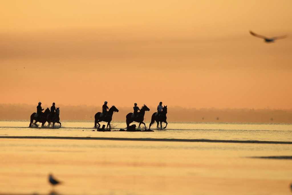 MELBOURNE, AUSTRALIA - OCTOBER 05: Horses from the Chris Waller stable walk through the shallow waters during a trackwork session at Altona Beach on October 5, 2015 in Melbourne, Australia. Horses pictured are Preferment, Who Shot Thebarman, Hawkspur, Royal Descent and Maygrove from the Murray Baker stable. (Photo by Vince Caligiuri/Getty Images)