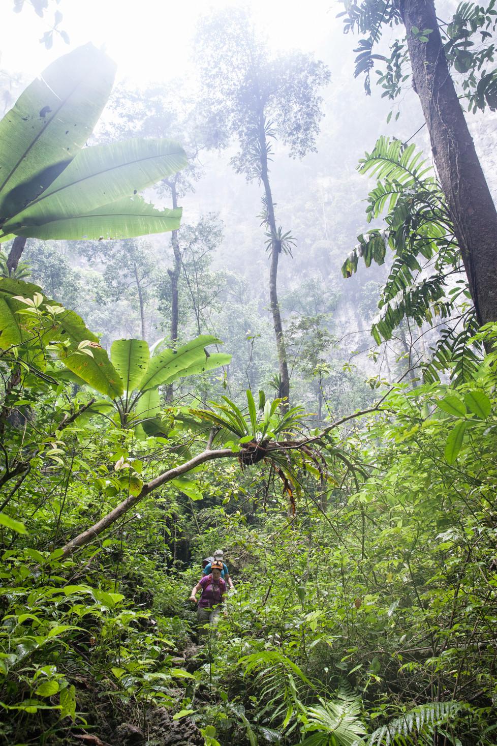 """Der Dschungel bei der zweiten Doline """"Garden of Edam"""" in Son Doong Cave. Foto: Tanja Demarmels"""