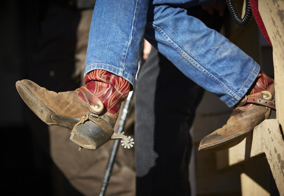 South Dakota USA, Vorbereitungen zum Buffalo Roundup 2015 im Custer State Park. Foto: Moritz Hager
