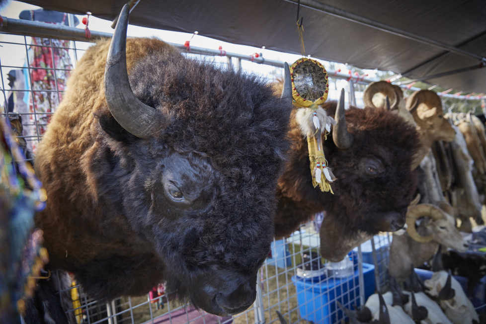 South Dakota USA, Arts Festival anlaesslich des Buffalo Roundup 2015 im Custer State Park. Foto: Moritz Hager