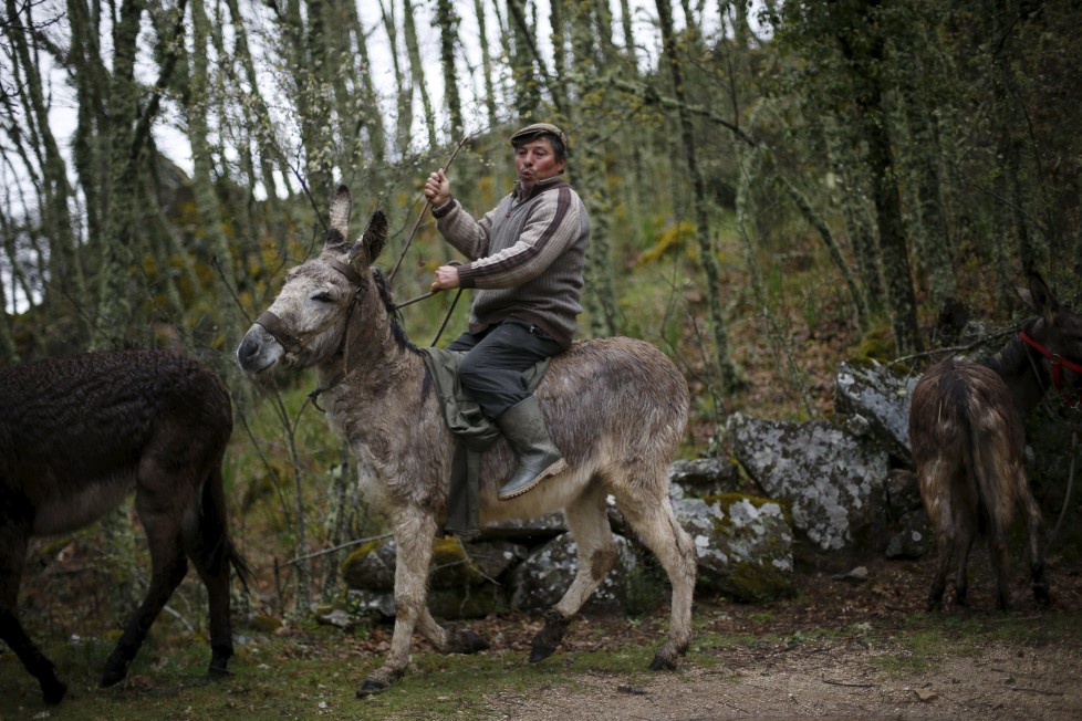 """Antonio Fontes rides a donkey near Agracoes, near Chaves, Portugal April 19, 2016. In the villages of Agracoes and Povoa de Agracoe, the steady drip-drip of emigration has brought down population numbers from more than 50 residents to fewer than a dozen each. These remaining villagers share the same glum acceptance that, after they have gone, their villages will die out too. It is the same desolate picture in scores of other backwater settlements in Portugal's interior, north to south. REUTERS/Rafael Marchante SEARCH """"ABANDONED PORTUGAL"""" FOR THIS STORY. SEARCH """"THE WIDER IMAGE"""" FOR ALL STORIES"""