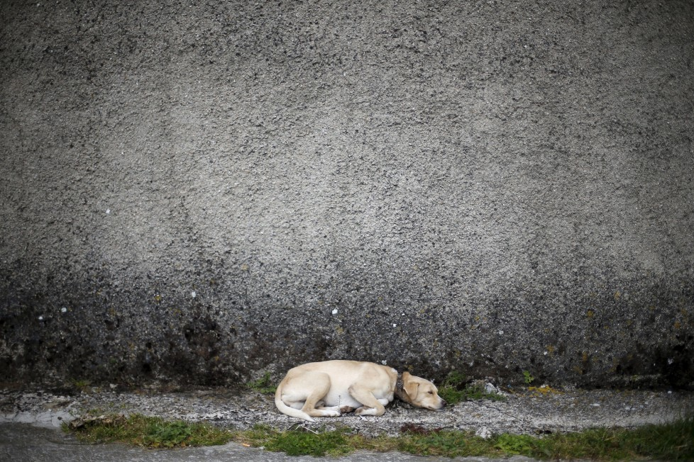 """A dog sleeps at a street in Povoa de Agracoes, near Chaves, Portugal April 18, 2016. In the villages of Agracoes and Povoa de Agracoe the steady drip-drip of emigration has brought down population numbers from more than 50 residents to fewer than a dozen each. These remaining villagers share the same glum acceptance that, after they have gone, their villages will die out too. It is the same desolate picture in scores of other backwater settlements in Portugal's interior, north to south. REUTERS/Rafael Marchante SEARCH """"ABANDONED PORTUGAL"""" FOR THIS STORY. SEARCH """"THE WIDER IMAGE"""" FOR ALL STORIES"""