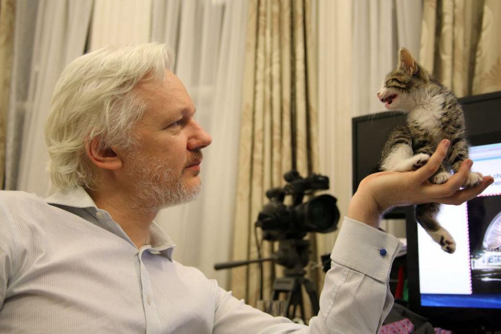 This is an undated handout photo issued by Sunshine Press made available Tuesday May 10, 2016 of WikiLeaks founder Julian Assange with a kitten in Ecuador's embassy in London . It may not be so lonely for WikiLeaks founder Julian Assange in the embassy quarters he's called home for nearly four years. Now he has a kitten to keep him company.The kitten had not been named yet. (Sunshine Press/Wikileaks via AP) *** Lieben mich meine Katzen *** Lieber Jost, In der Beilage schicke ich dir die Bilder, die nicht © sind, immerhin schon mal sechs Bilder. Zudem solltest du unter Eingabe des Wortes AUSWAHLKATZENFORSCHWARZERMONTAG rund 78 Bilder finden, die © sind. Daraus kannst du so viele auswählen wie du willst, Einzelpreis ist CHF 40.-. Lass mich wissen, welche Bilder du willst, dann schicke ich dir die gewünschten Bilder zu (keine Downloadkosten). Einziger Vorbehalt wäre, dass jedes einzelne Bild mit einem vollständigen Urheberrechtsnachweis sein muss, meinst du das geht?` Lass mich wissen, was ich tun soll. Würde mich freuen wenn's klappt. Danke & Gruss, Jann