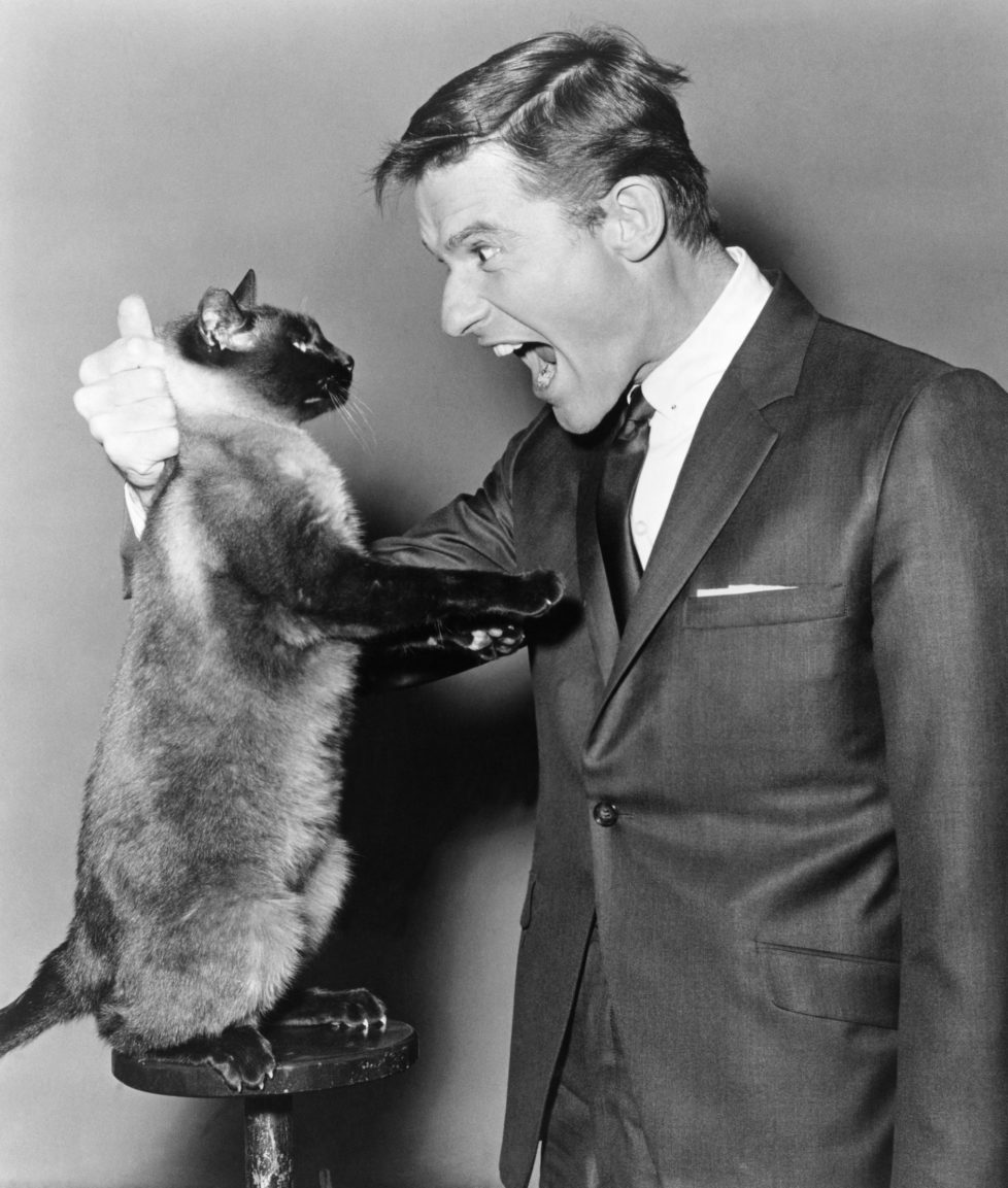 THAT DARN CAT, Roddy McDowall, 1965 (KEYSTONE/Everett Collection/) IM BILD / BILDSEITE LIEBEN MICH MEINE KATZEN BUND 23.7. TAGI 26.7.