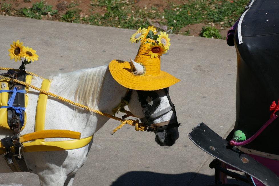 Fotowettbewerb KW 30 - Hitze In Merida/Mexico tragen die Pferde bei grosser Hitze Hüte, damit das Warten auf Touristen etwas angenehmer ist