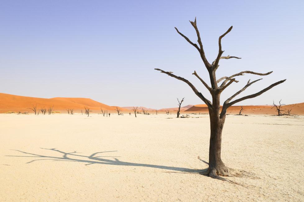 Fotowettbewerb KW 30 - Hitze Vertrockneter Akazienbaum in der Namib Wüste (Dead Vlei) in Namibi