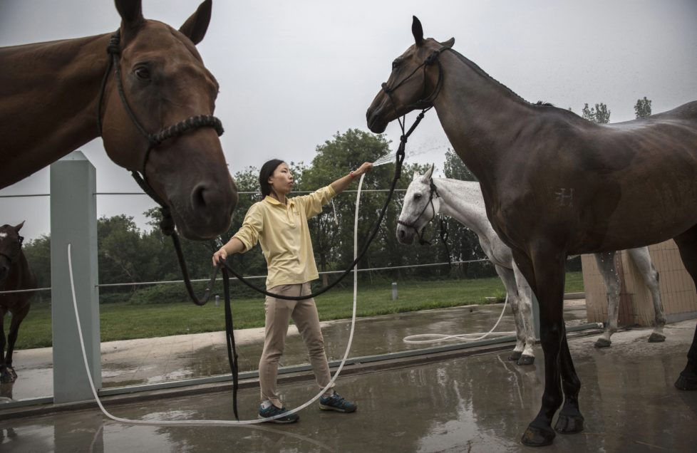 "TIANJIN, CHINA - JULY 17: A Chinese horse trainer washes polo horses after exercise at the Tianjin Goldin Metropolitan Polo Club on July 17, 2016 in Tianjin, China. China's rising affluence has nurtured growing interest in polo and other past-times regarded as noble or prestigious by the country's elite. Clubs and international-size polo fields have been built in various cities including Beijing and Shanghai, and on the outskirts of Tianjin, where membership at the exclusive Goldin Metropolitan, China's largest polo club, is by invitation-only and fees can be significant for polo team owners. Increasingly, wealthy Chinese parents are choosing polo and other equestrian activities for their children as a way to bolster their credentials for admission to top-tier universities in the United States and the United Kingdom. While the so-called ""sport of kings"" became a mainstay in Hong Kong during the era of British rule, polo is a relatively new sport to mainland China. Professional polo players are frequently flown in from countries such as New Zealand and Argentina in order to field competitive matches. Many of the polo clubs in China are tied to luxury real estate developments. (Photo by Kevin Frayer/Getty Images)"
