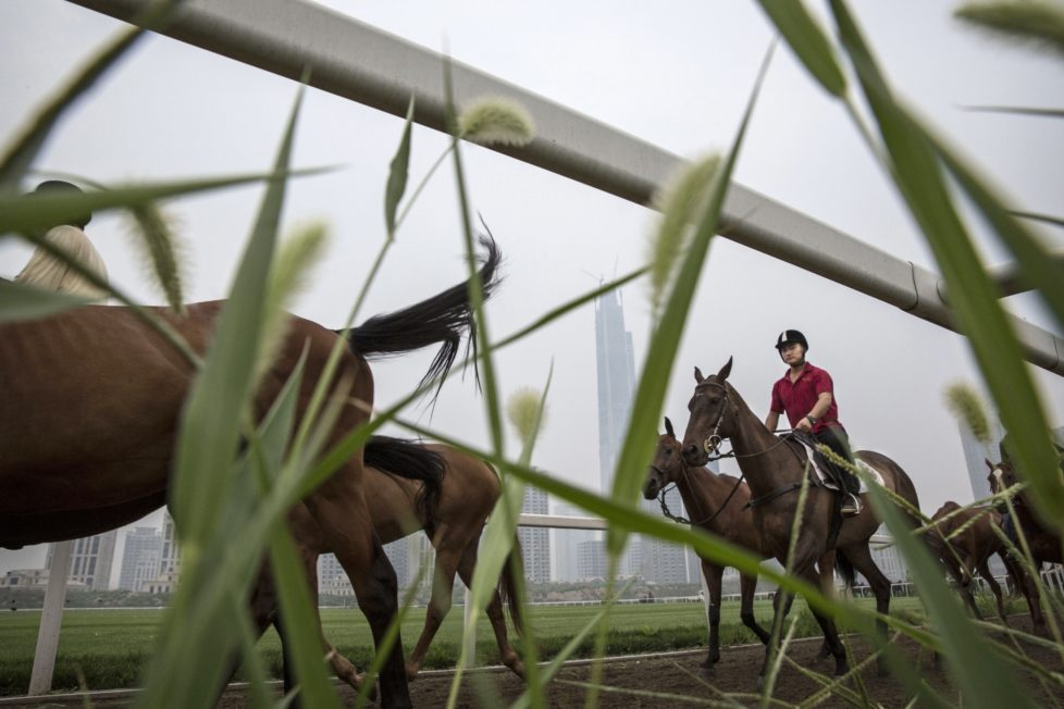 "TIANJIN, CHINA - JULY 17: A Chinese horse trainer exercises polo horses at the Tianjin Goldin Metropolitan Polo Club on July 17, 2016 in Tianjin, China. China's rising affluence has nurtured growing interest in polo and other past-times regarded as noble or prestigious by the country's elite. Clubs and international-size polo fields have been built in various cities including Beijing and Shanghai, and on the outskirts of Tianjin, where membership at the exclusive Goldin Metropolitan, China's largest polo club, is by invitation-only and fees can be significant for polo team owners. Increasingly, wealthy Chinese parents are choosing polo and other equestrian activities for their children as a way to bolster their credentials for admission to top-tier universities in the United States and the United Kingdom. While the so-called ""sport of kings"" became a mainstay in Hong Kong during the era of British rule, polo is a relatively new sport to mainland China. Professional polo players are frequently flown in from countries such as New Zealand and Argentina in order to field competitive matches. Many of the polo clubs in China are tied to luxury real estate developments. (Photo by Kevin Frayer/Getty Images)"
