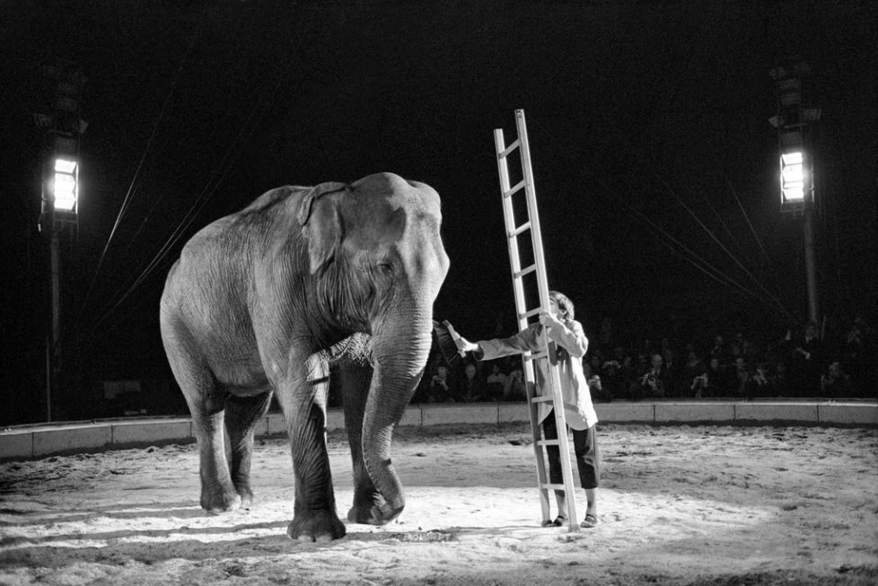 "Clown Dimitri tries to mount an elephant with the help of a ladder during a performance at the ""Circus Knie"", pictured on March 14, 1970 in Rapperswil in the canton of St. Gallen, Switzerland, at start of ""Circus Knie's"" tour. Clown Dimitri versucht waehrend einer Vorstellung im Zirkus Knie mit der Leiter an einem Elefanten hochzusteigen, aufgenommen am 14. Maerz 1970 in Rapperswil beim Tournee-Start des Zirkus Knie. (KEYSTONE/Str)"