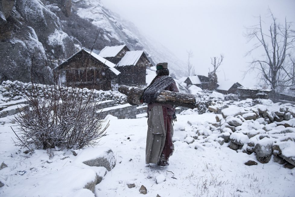 Kinnaura tribal old women in remote village in Himachal Pradesh carrying big log back home to warm up her house