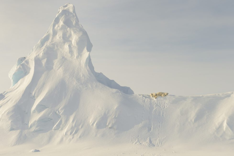 "This photo was taken far out on the sea ice in the Davis Straight off the coast of Baffin Island. This mother and her yearling are perched atop a huge snow covered iceberg that got ""socked in"" when the ocean froze over for the winter. To me, the relative ""smallness"" of these large creatures when compared to the immensity of the iceberg in the photo represents the precariousness of the polar bear's reliance on the sea and sea ice for its existence."