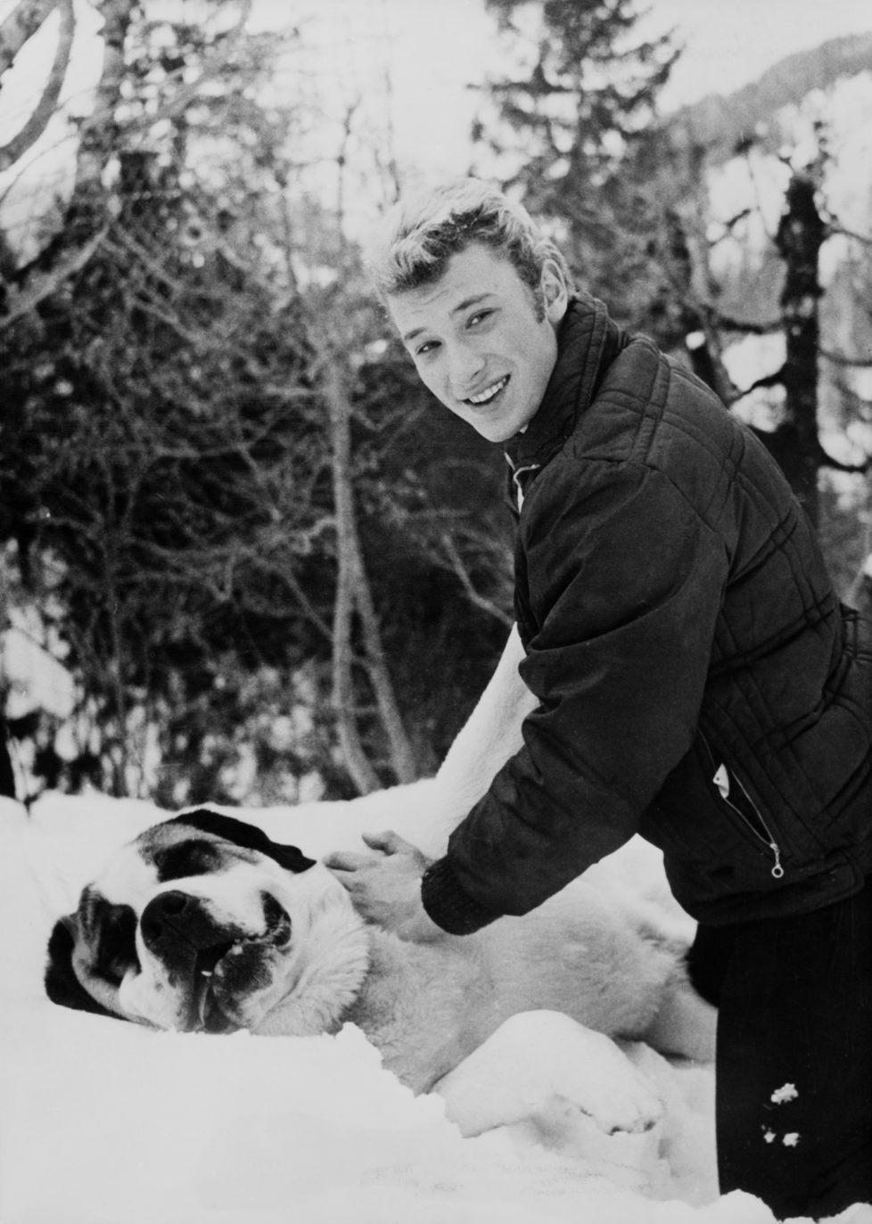 GSTAAD, SWITZERLAND - JANUARY 07: Johnny Hallyday playing with a Saint Bernard dog in Gstaad, Switzerland, on January 7, 1962. (Photo by Keystone-FranceGamma-Rapho via Getty Images) *** Local Caption *** Johnny Hallyday