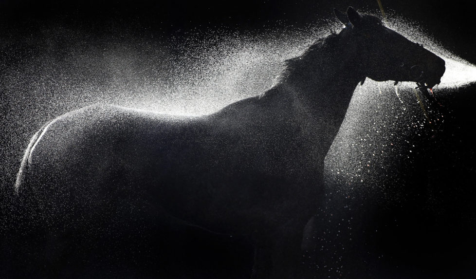 WARWICK, ENGLAND - DECEMBER 08: Rons Dream is hosed down at Warwick racecourse on December 08, 2016 in Warwick, England. (Photo by Alan Crowhurst/Getty Images)